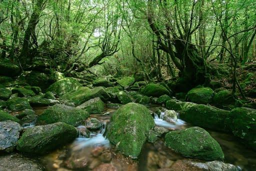 Yakushima (Island) National Park in Japan